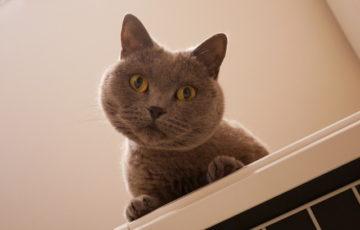 ハテナ顔の猫